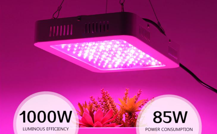 Grodt 1000W LED Kweeklamp in werking