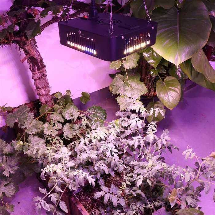 Hydrotec 600 Watt LED Kweeklamp Vierkant Zwart toegepast op planten